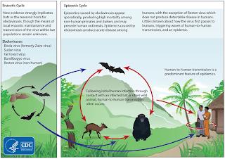 Penyebaran Penyakit Ebola