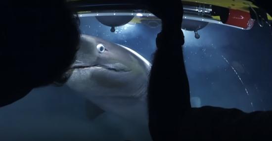Tubarões atacam submarino que filmava documentário da BBC - img 2