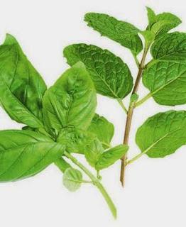 Albahaca fresca, alimento que comienza con A
