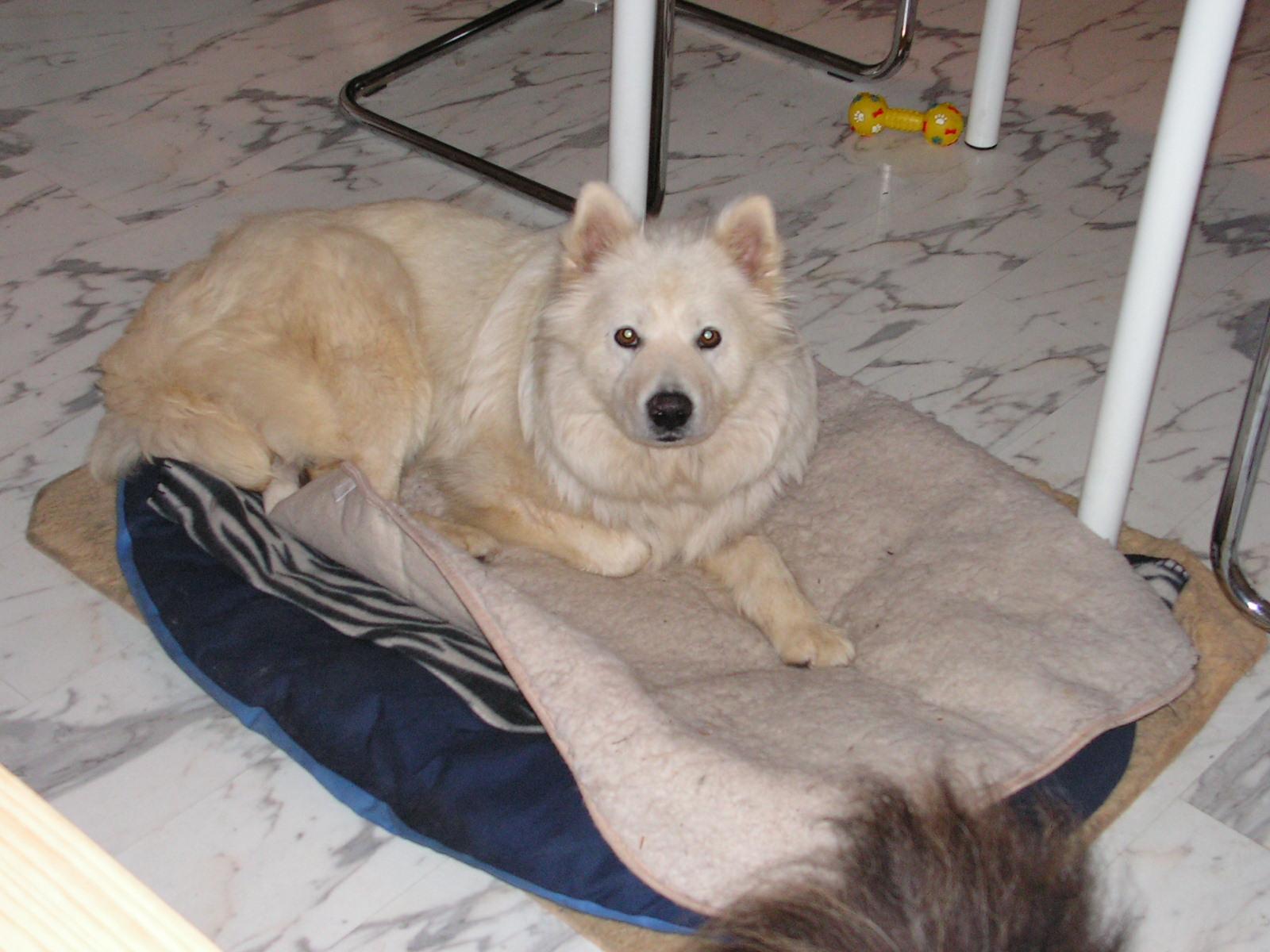 klartext hund die stille wenn ein hund nicht mehr bellt f r koka. Black Bedroom Furniture Sets. Home Design Ideas