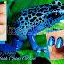Digit-Al Dozen : Blue Poison Frog