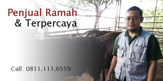 Jual Hewan Qurban Jakarta