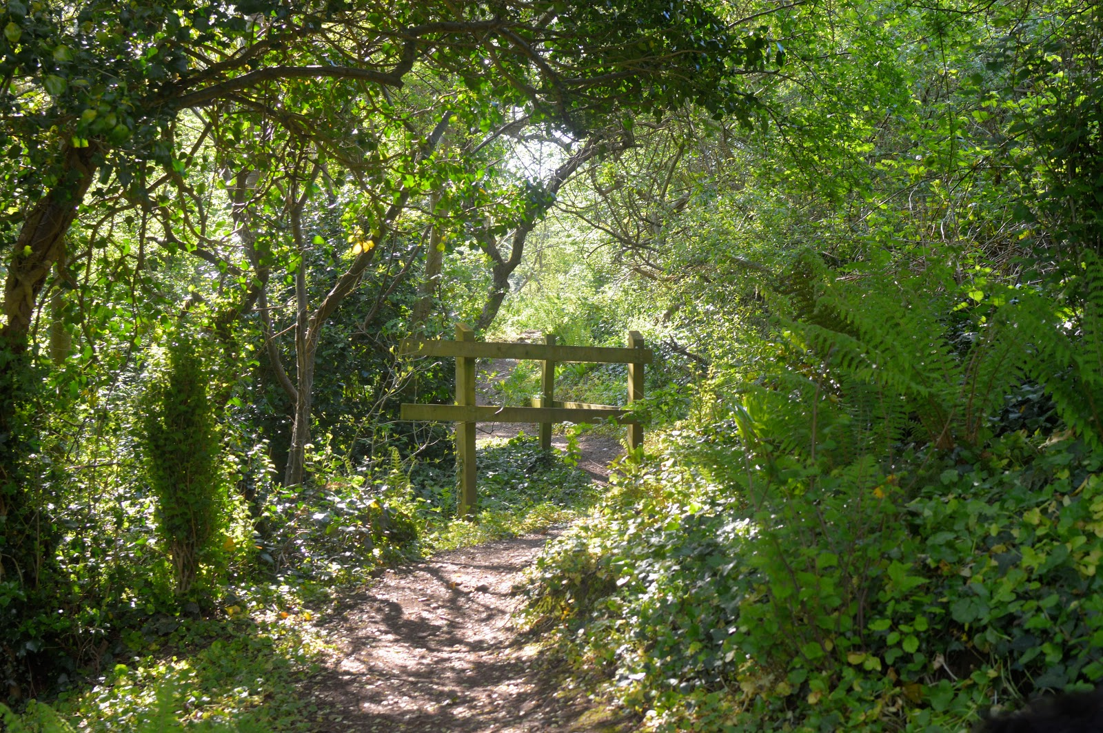 , Castle Pill Woods, Milford Haven, Pembrokeshire #countrykids