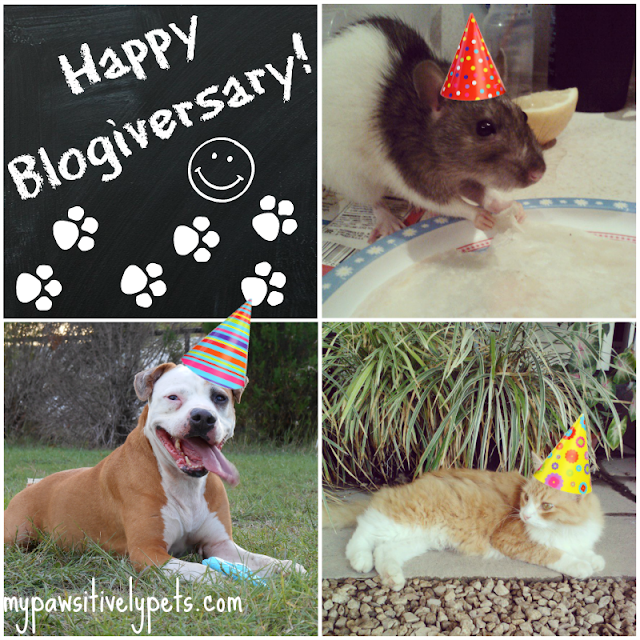 Pawsitively Pets Blogiversary