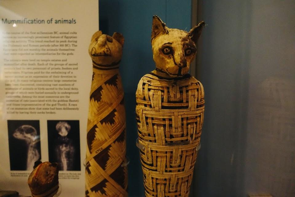 猫のミイラ(Mummified cat)