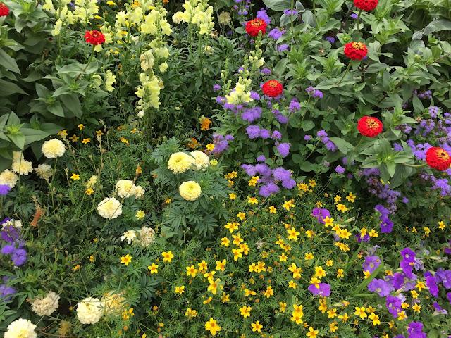 Bunt blühende Blumen Sommer