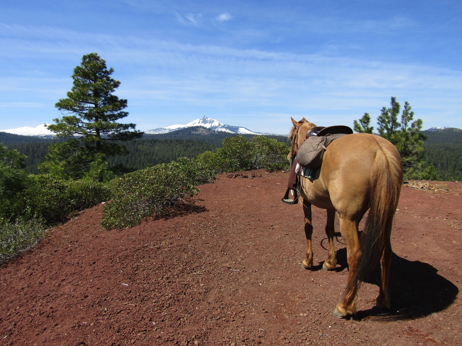 Holly Blogs Her Adventures: Graham Corral Horse Camp ...