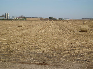baled corn stalks