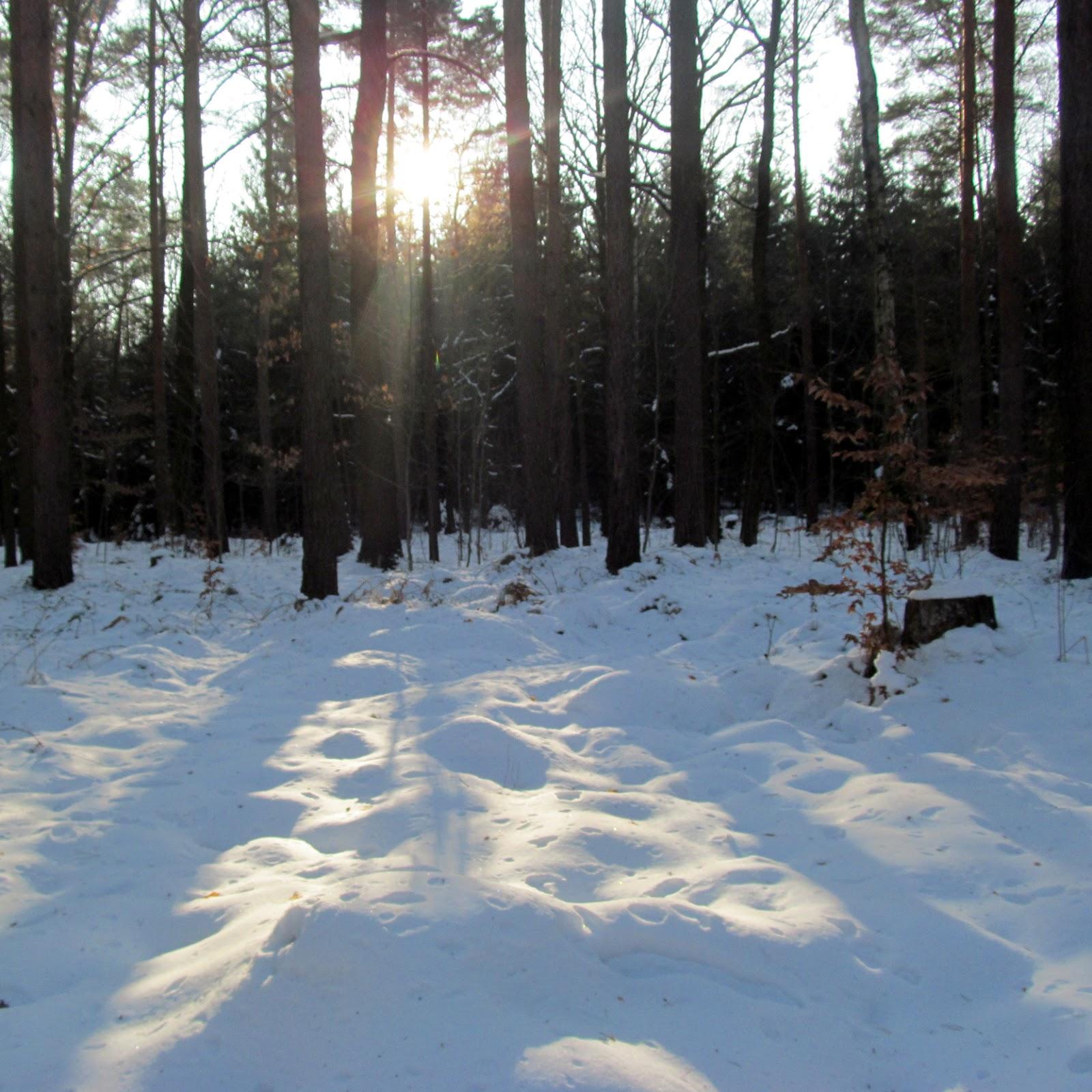 Draussen: Heide, März, Schnee