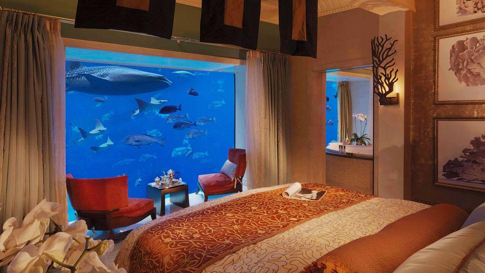 Lucky Tulip Aquarium Dalam Bilik Tidur