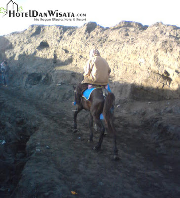 Kuda yang disewakan oleh penduduk setempat