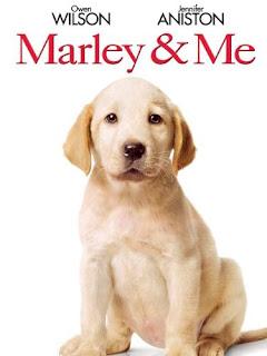 Marley & Me, Cute Puppy Photo