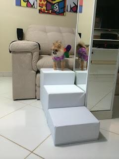 escadas sob encomenda para cães