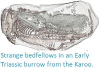 http://sciencythoughts.blogspot.co.uk/2013/07/strange-bedfellows-in-early-triassic.html