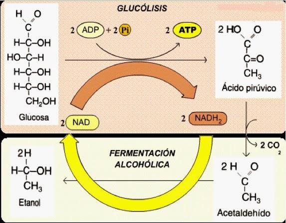 Prueba este genio Ibuprofeno metabolismo Plan