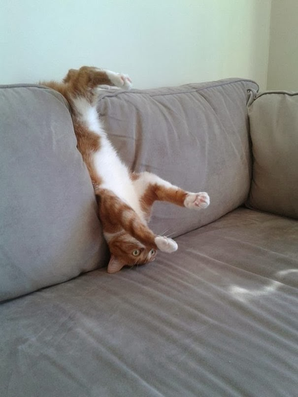 epic cat fails2