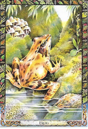 26 Frogs - Voices Of The Night The Calls Of 26 Frogs And Toads Found In Eastern North America