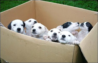 Humans are puppies in a box