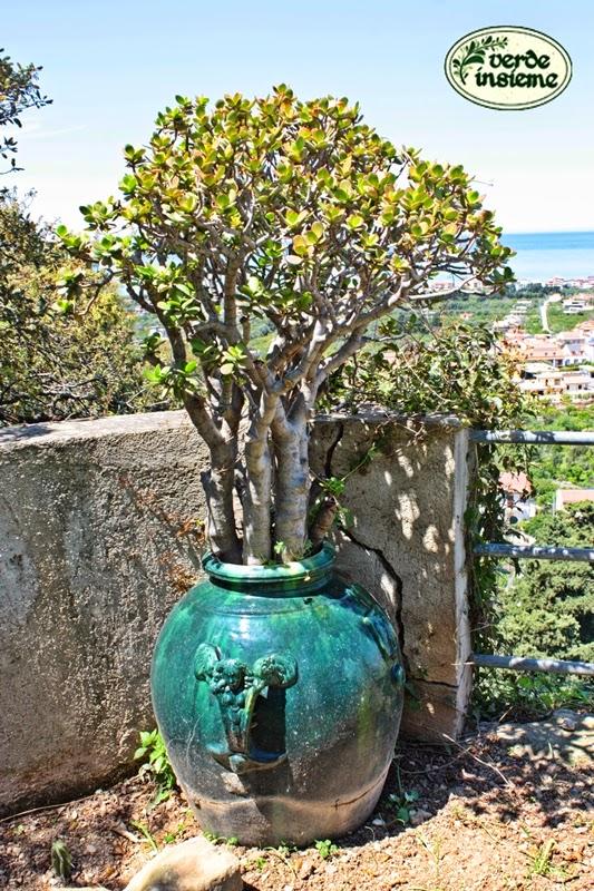 Il giardino della villa piccolo di calanovella - Giardino piccolo foto ...