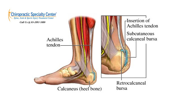 tendons of the heel and foot
