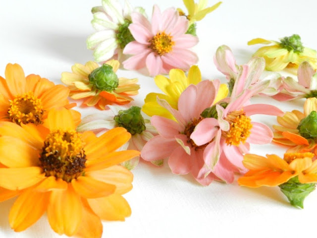 Pink Yellow and Orange Zinnias