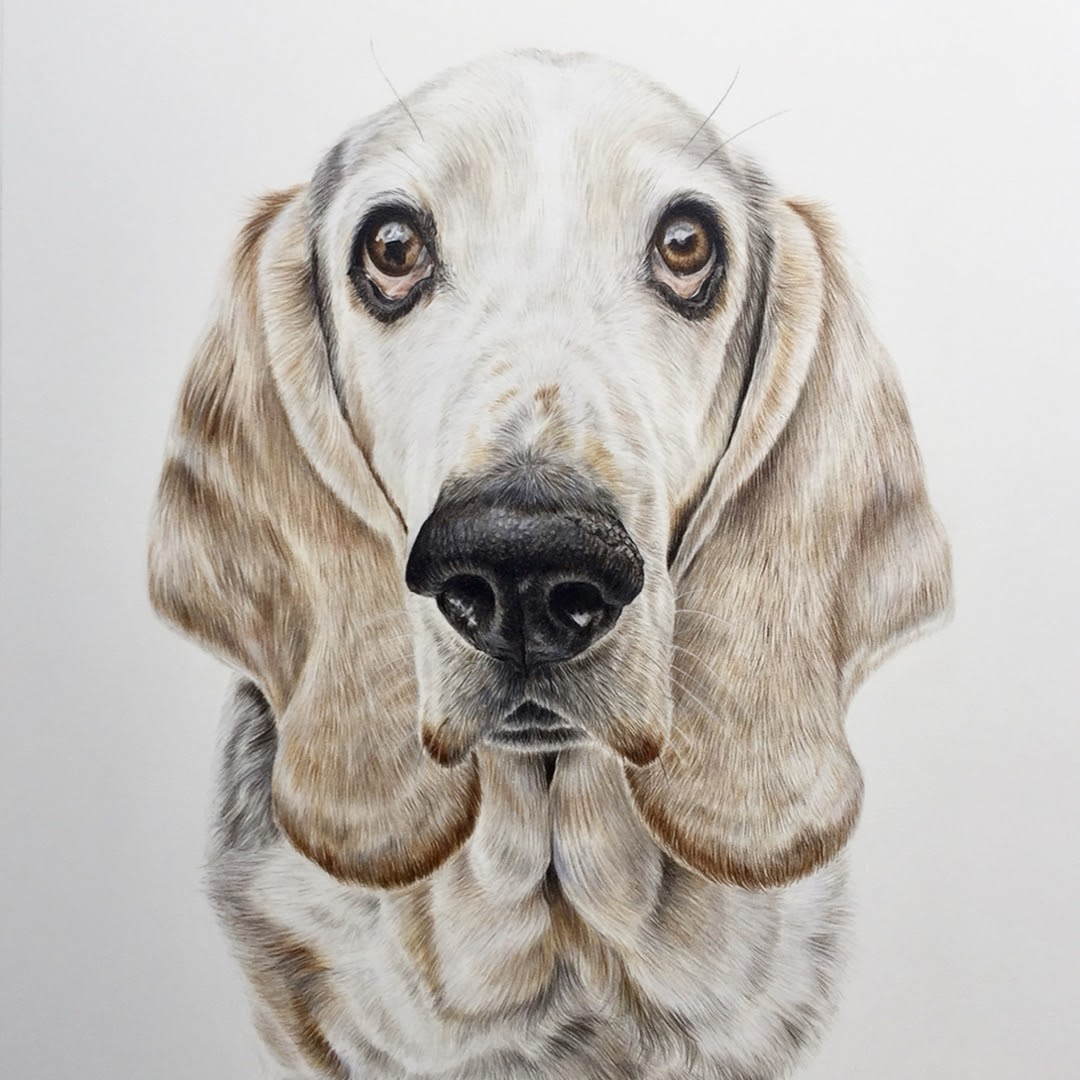 04-Basset-hound-Zoe-Fitchet-Pet-Portraits-Cats-and-Dogs-Drawings-www-designstack-co
