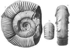 Konsep Dasar Paleontologi