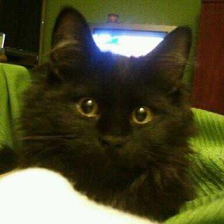 gato-negro-mala-suerte-brujas-mito