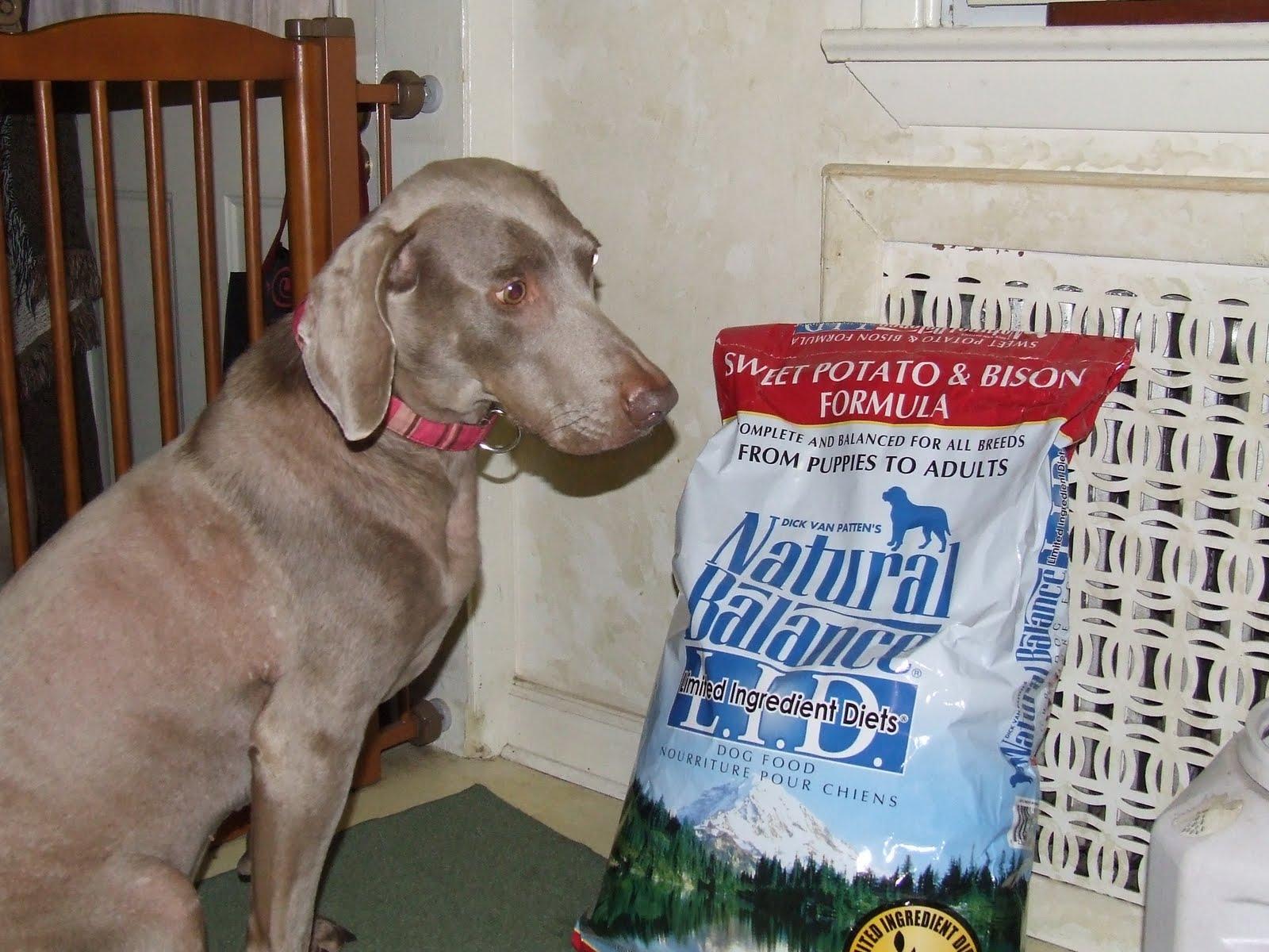 Dog Wont Eat Dog Food Losing Weight