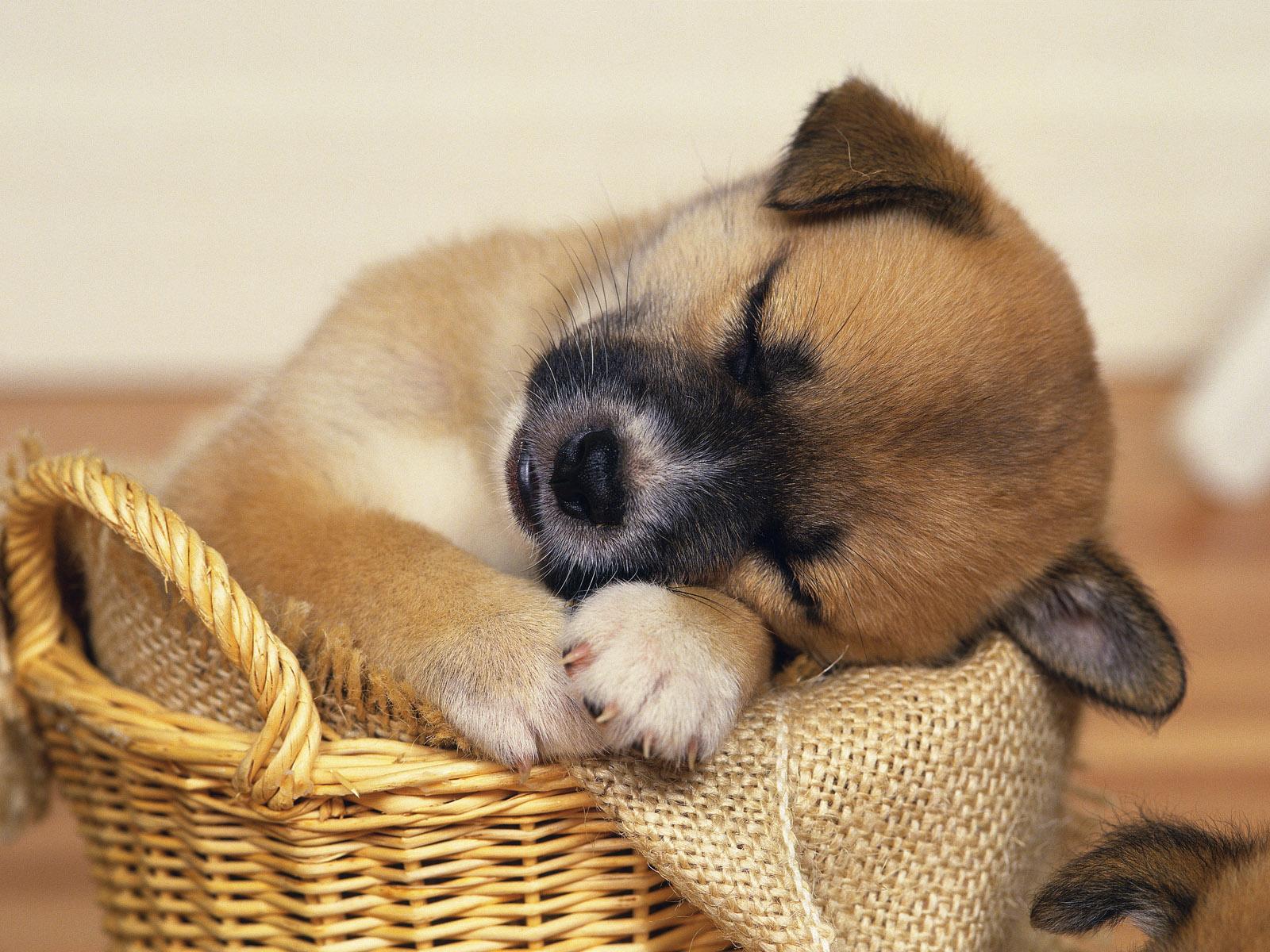 cute puppies sleeping wallpaper - photo #30