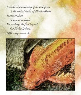 Little Orange Monarch Copyright 2017 Christopher V. DeRobertis. All rights reserved. insilentpassage.com