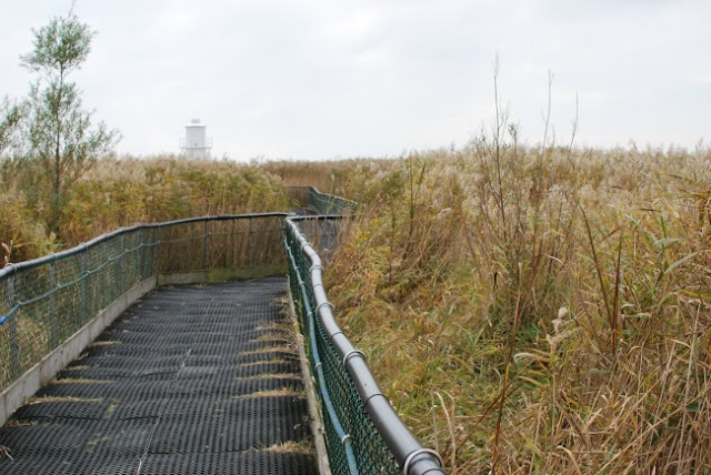 A-Day-Out-at-RSPB-Newport-Wetlands-wobbly-bouncy-bridge-with-lighthouse