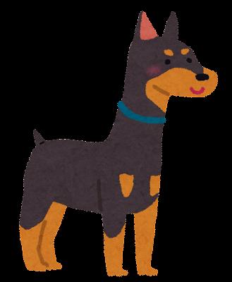 ドーベルマンのイラスト(犬)