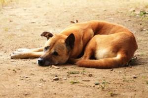 pet dog food nutrition