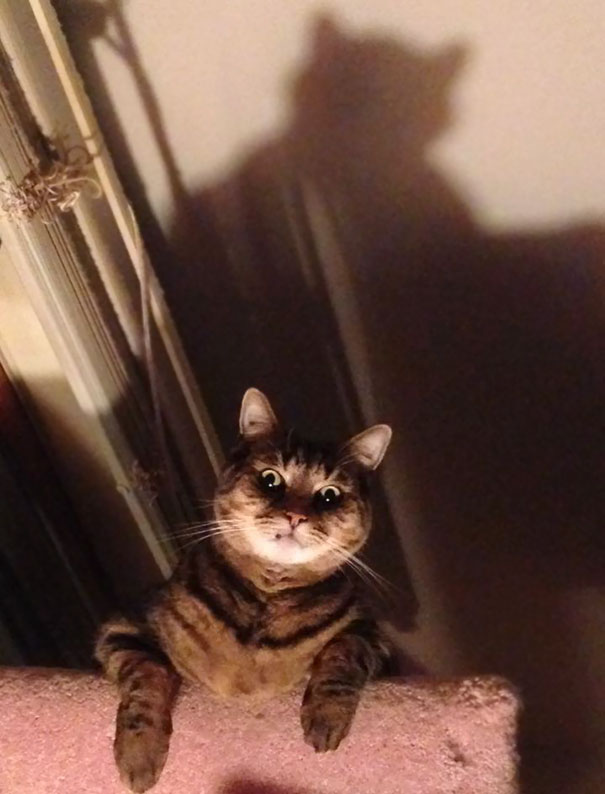 25 Pics Proving That Cats Are Actually Demons.