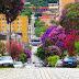 Árvores para plantar sem medo de quebrar a calçada