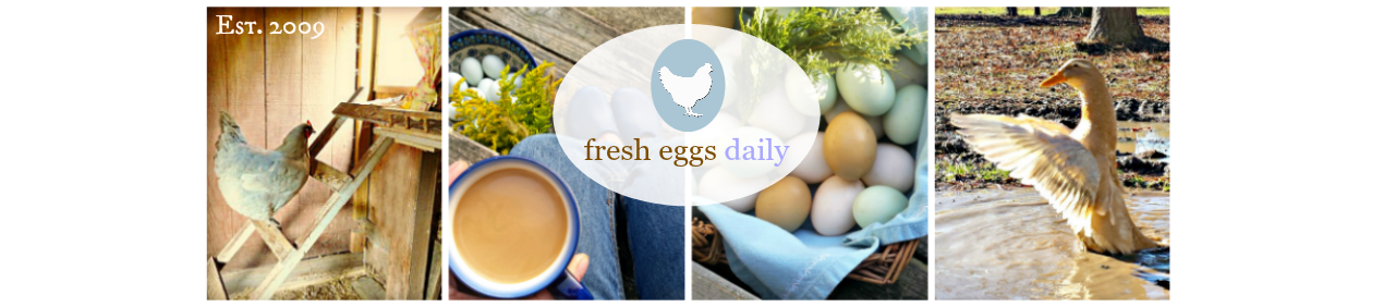 Basic Baby Chick Care Fresh Eggs Daily 174