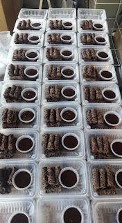 Resepi Kuah Manis Roti Jala Coklat