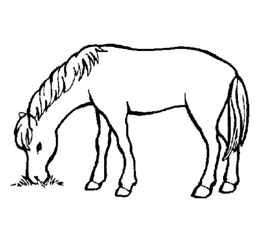 malvorlagen pferd