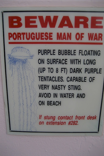 Once You See This Alluring 'Purple Bubble' On The Beach, You Better Swim Away And Stay Out Of The Water Or You Might Get Killed!