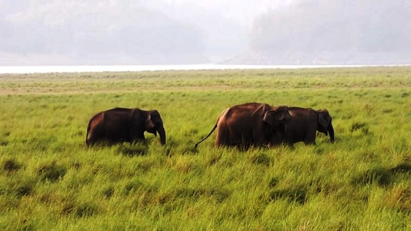 Jim Corbett National Park, Uttarakhand - The Oldest National Park in India