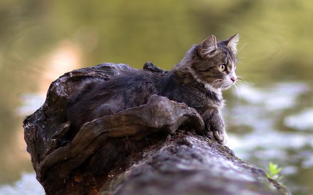 Kat op boomstam