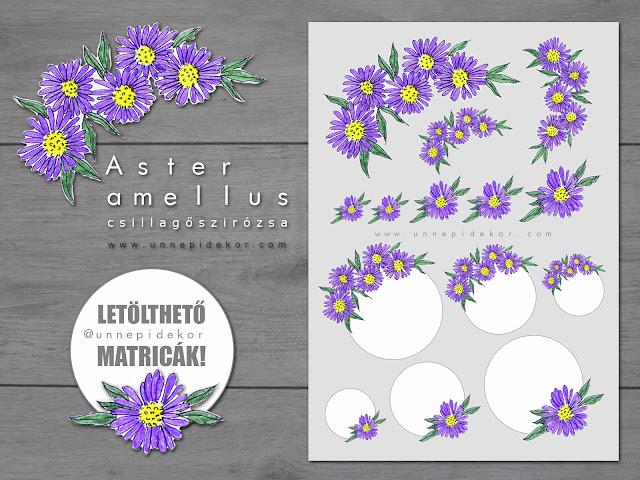 CSILLAGÓSZIRÓZSA (Aster Amellus)