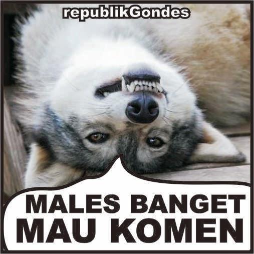 Image Result For Cerita Lucu Jorok Singkat