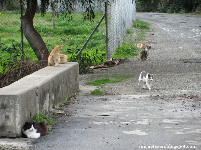 Кипр - большая кошачья семья