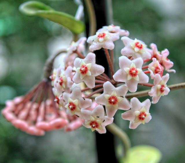 Flor con hormigas