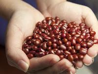 Manfaat Kacang Merah Bagi Kesehatan