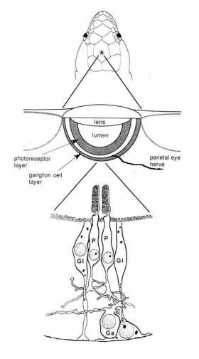 diagrams of reptiles of the outside