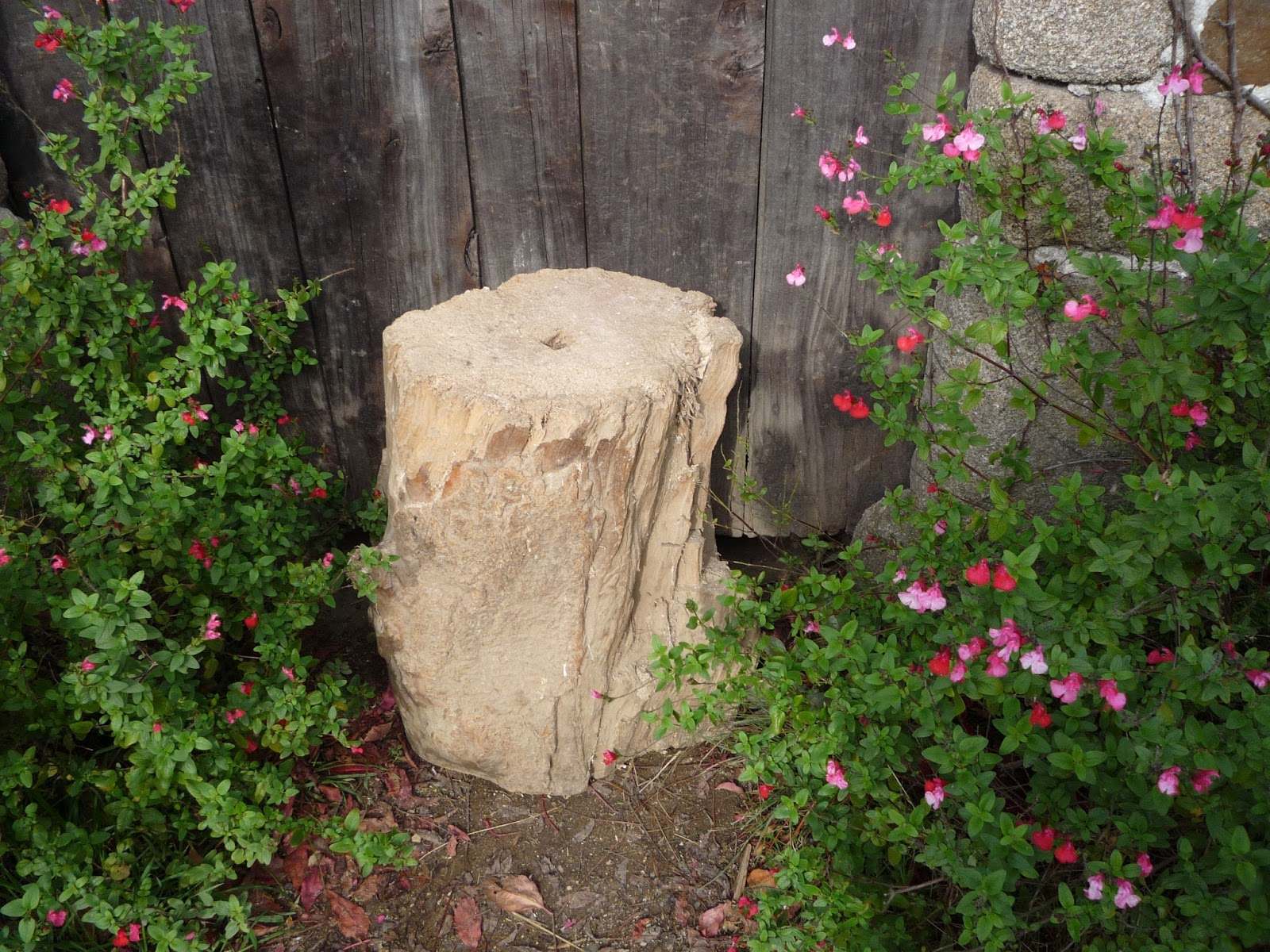 tree stump anchor for home-made guillotine
