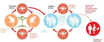 Gejala Virus Zika, Pengobatan Serta Cara Pencegahannya